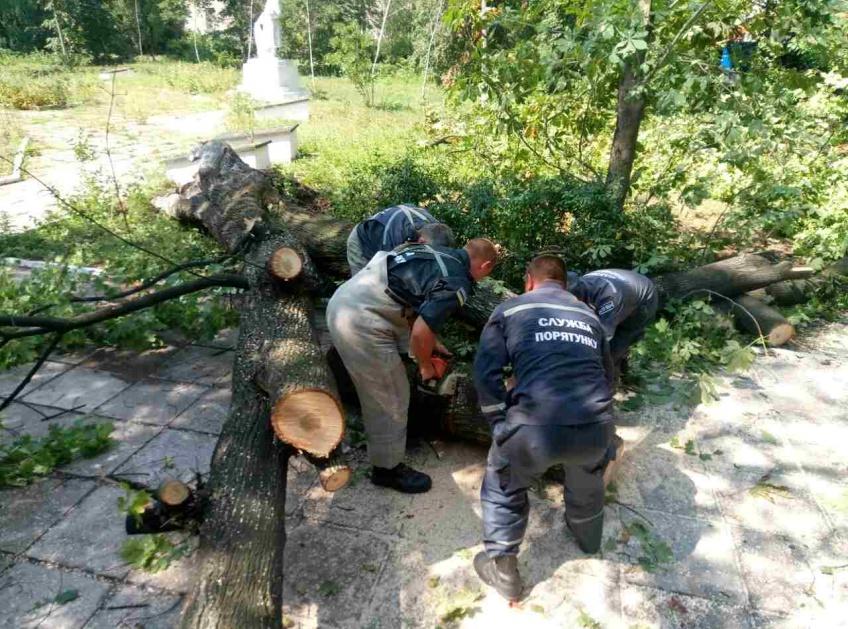 Повалене дерево перекрило рух автотранспорту на Косівщині